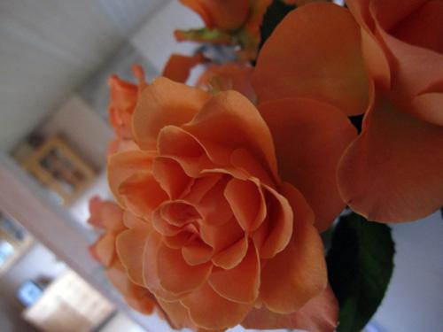 Roser fra Føtex