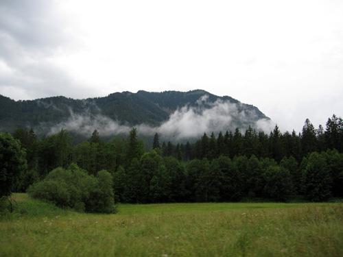 Damp i skoven