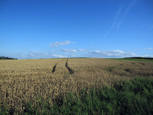 Kornmarker