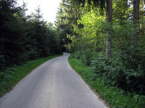 Ind gennem skoven