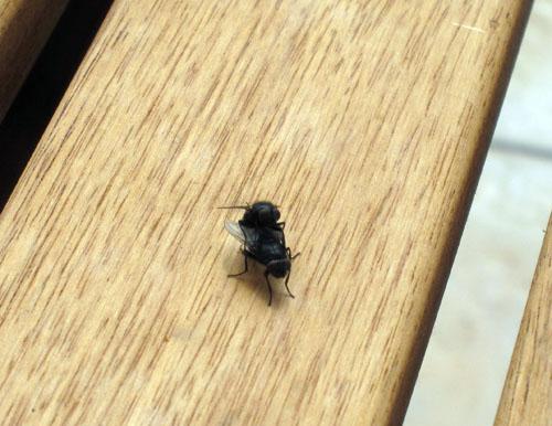 Endnu flere fluer på vej!