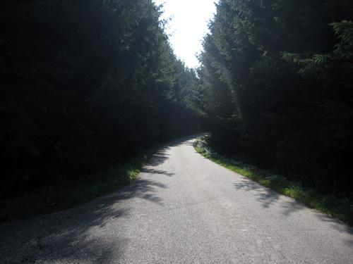 Igennem skoven...