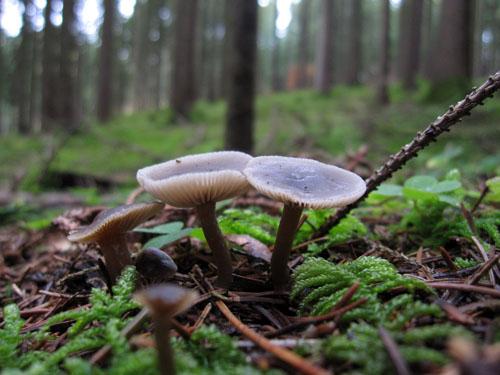 Svampe i skovbunden...
