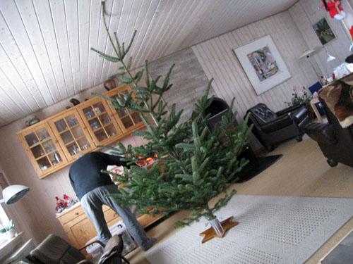 Juletræet er kommet på plads...