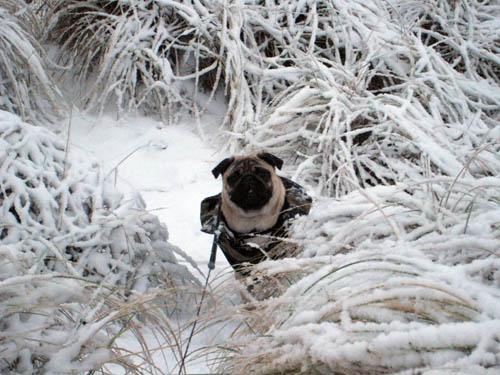 Buller i sneen...