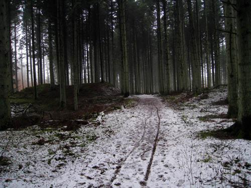Skoven...