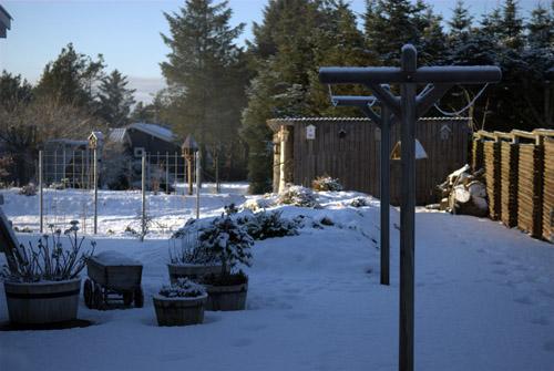 Flot frostvejr i haven....
