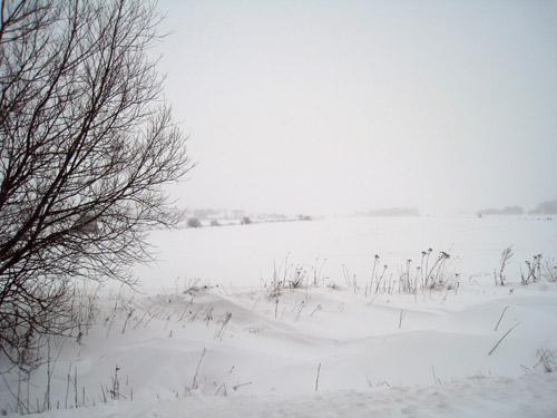 Hvidt i hvidt...