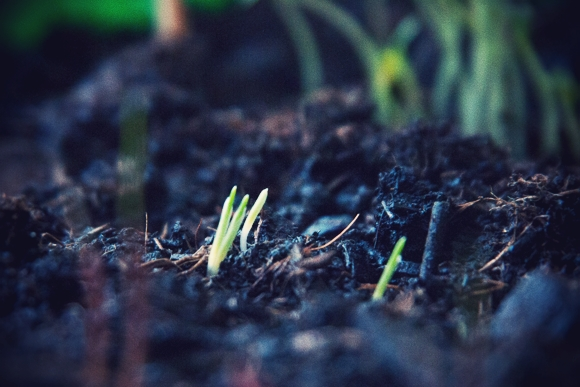 Min kanariske have...