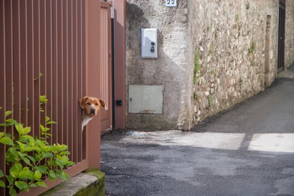 Opholdsvejr og en rundtur i Portese...