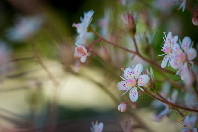 Havens blomster...