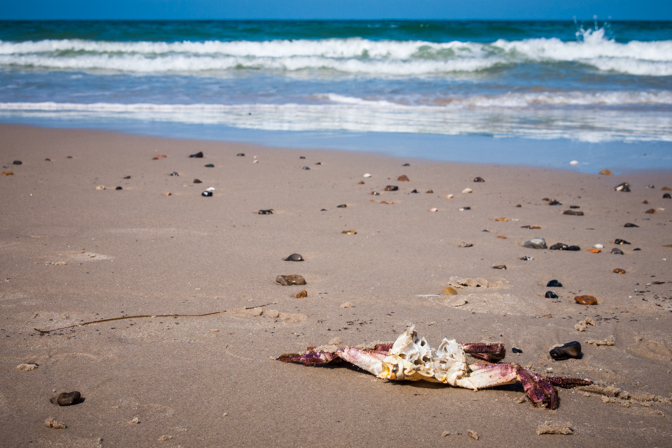 Langs stranden...