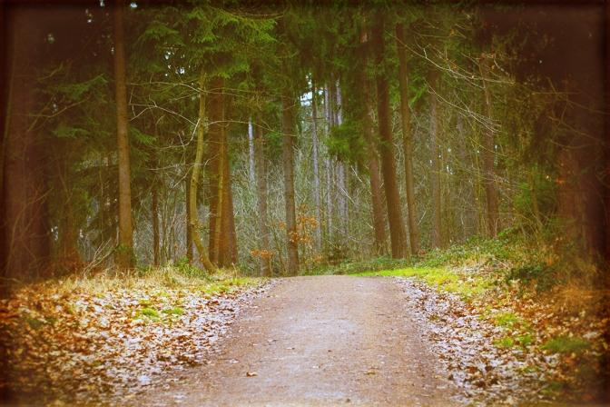 Wieswald - søndagsskovtur....