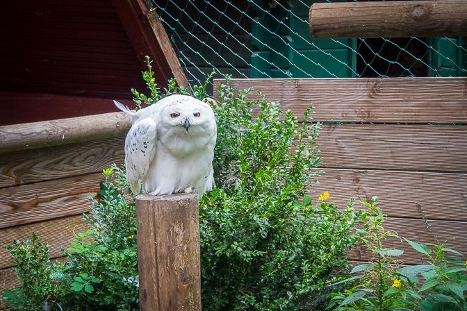 Hundertwasser og vogelparken...