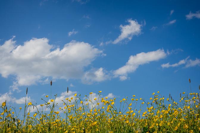 Blå himmel og masser af blomster...