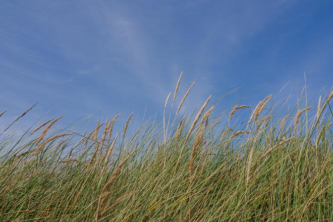 Sol, blå himmel og Karen Mukupa...