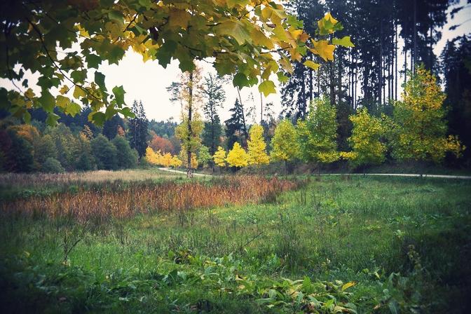 Efterår i Welt Wald...