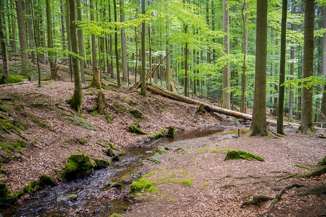 Tierfreigelände i Nationalpark Bayerischer Wald...